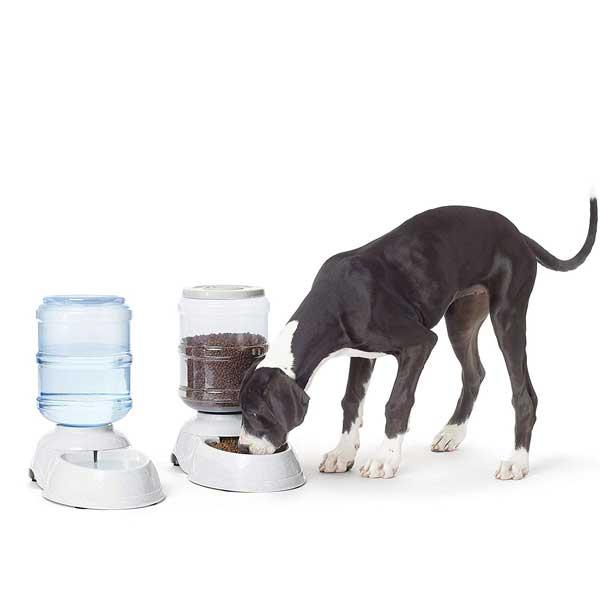 Distributeurs croquettes et eau grand chien