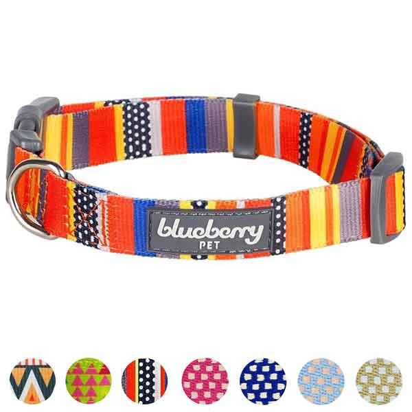 Collier multicolore pour chien