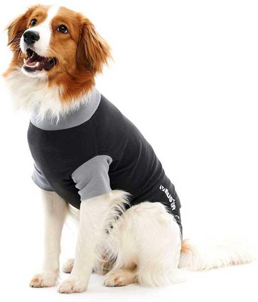 Body pour chien convalescent