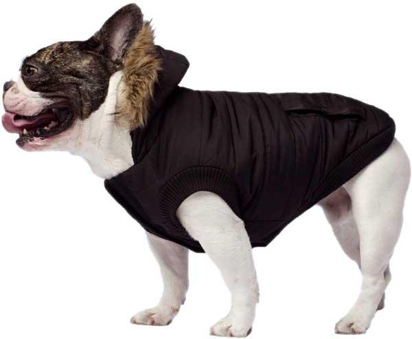 Parka chien de 15 kilos