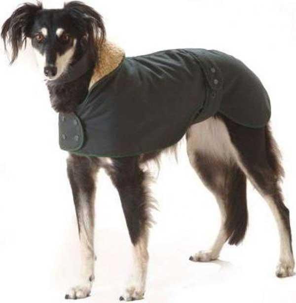 Manteau imperméable pour lévrier et Whippet
