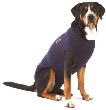 Gilet de protection chien convalescent