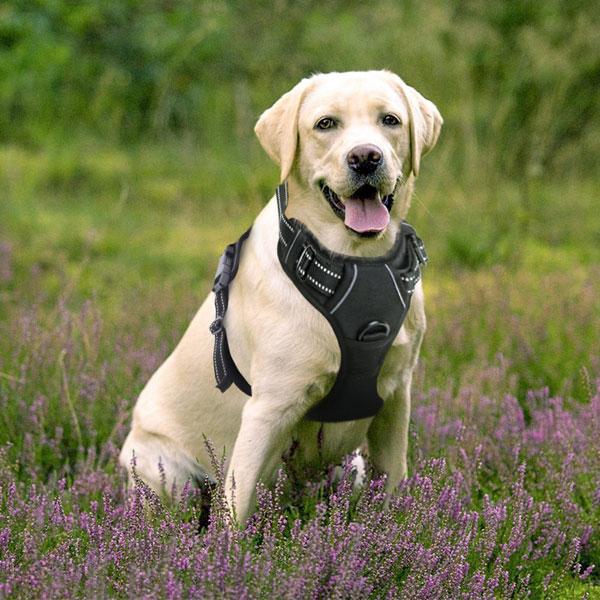 Harnais réglable pour chien