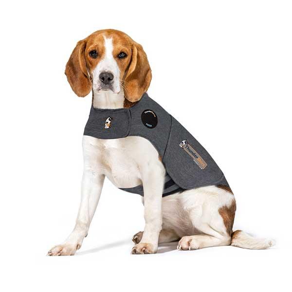 Veste thundershirt anti stress pour chien
