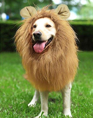 Perruque lion pour chien
