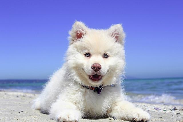 articles en vente pour rafraîchir votre chien par jour de forte chaleur. Ces produits sont ils efficaces ?