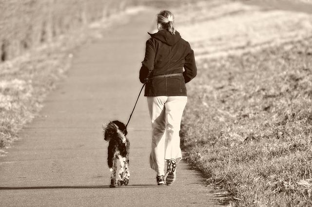 Comment prendre les mesures pour la taille d'un harnais pour son chien ?