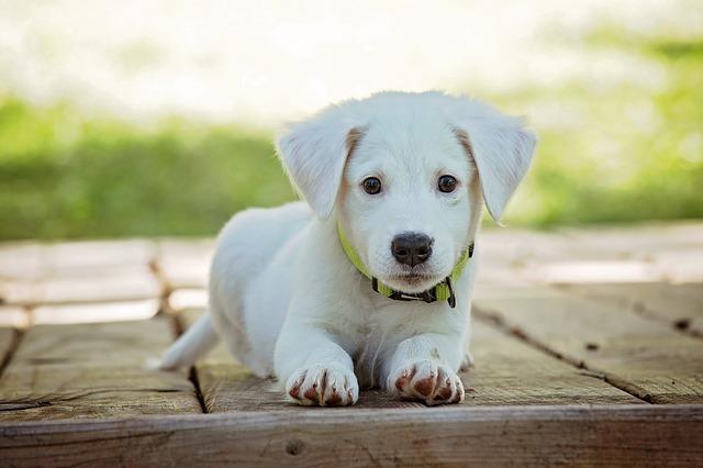 Choisir un nom pour son chien en 2018. Cette année, ce sont les prénoms débutant par un O qui doivent choisi pour un chien inscrit au LOF.