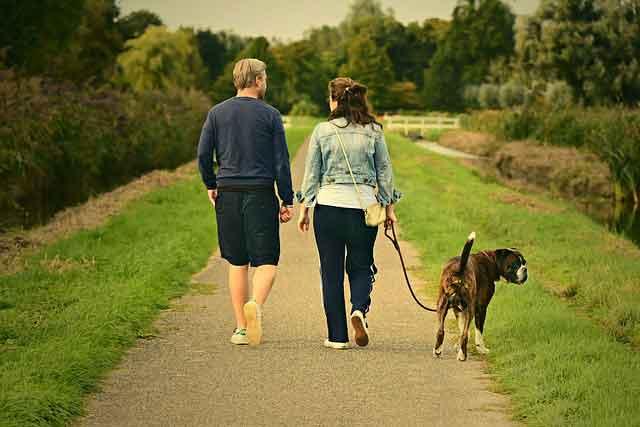 Conseils pour choisir la laisse de son chien ou chiot. Laisse courte, longue, en nylon, en cuir qu'elle est le bon choix ?